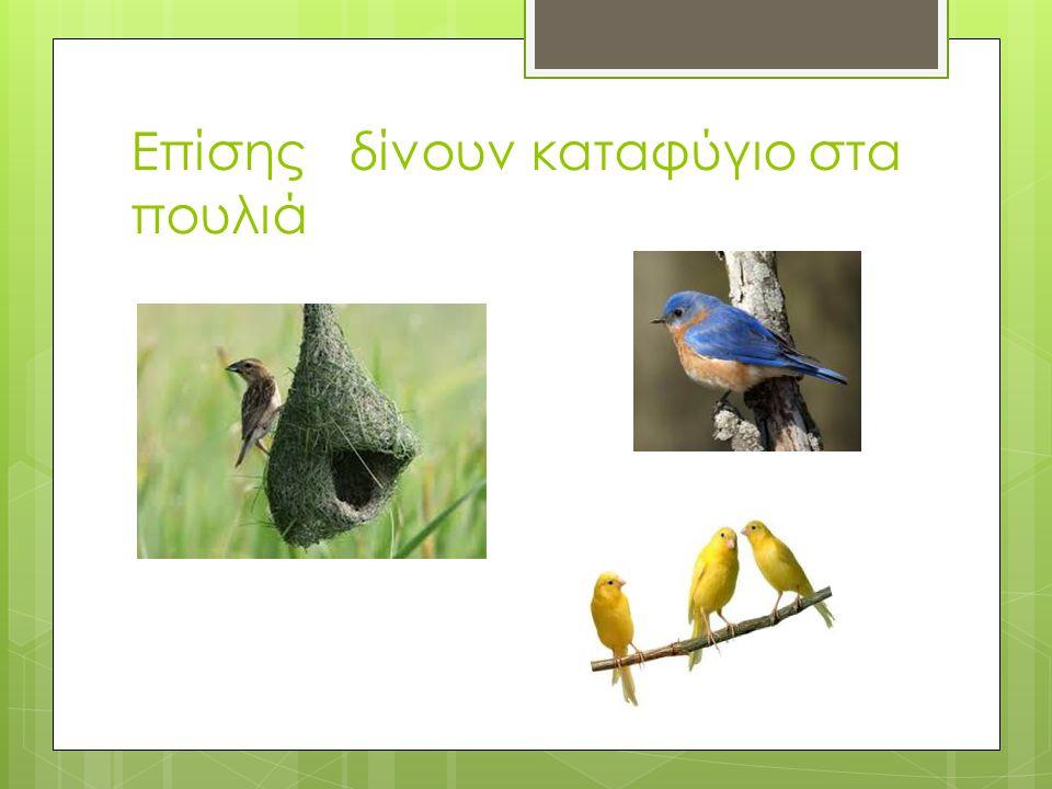 Επίσης δίνουν καταφύγιο στα πουλιά