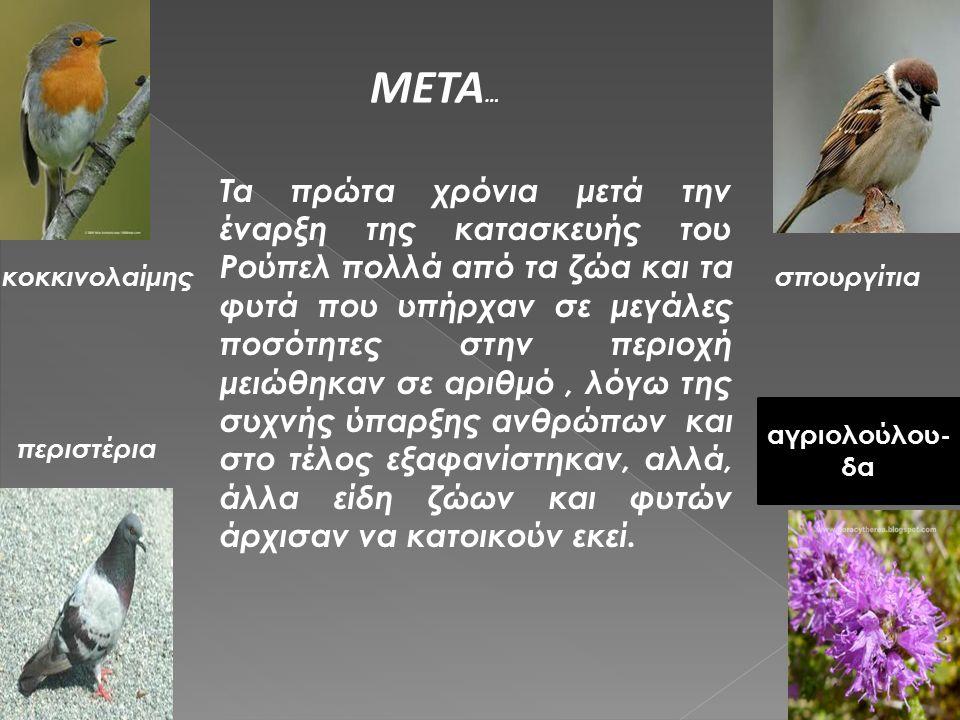 META…