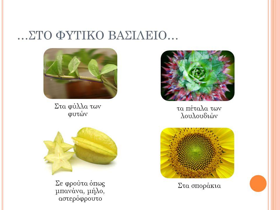 …ΣΤΟ ΦΥΤΙΚΟ ΒΑΣΙΛΕΙΟ… Στα φύλλα των φυτών τα πέταλα των λουλουδιών