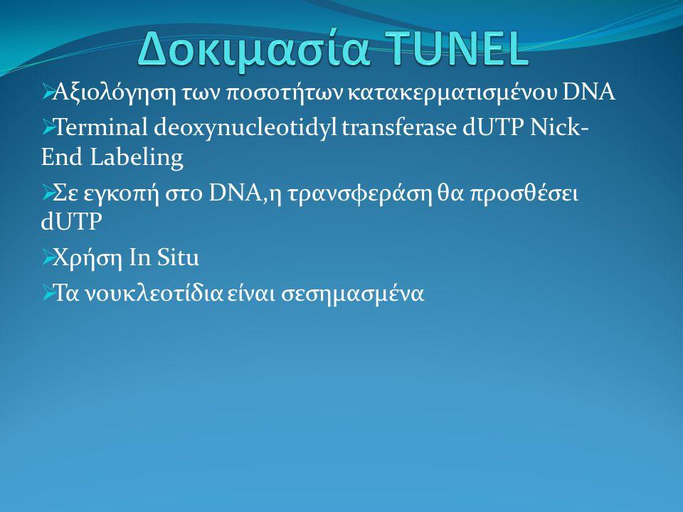 Δοκιμασία TUNEL Αξιολόγηση των ποσοτήτων κατακερματισμένου DNA
