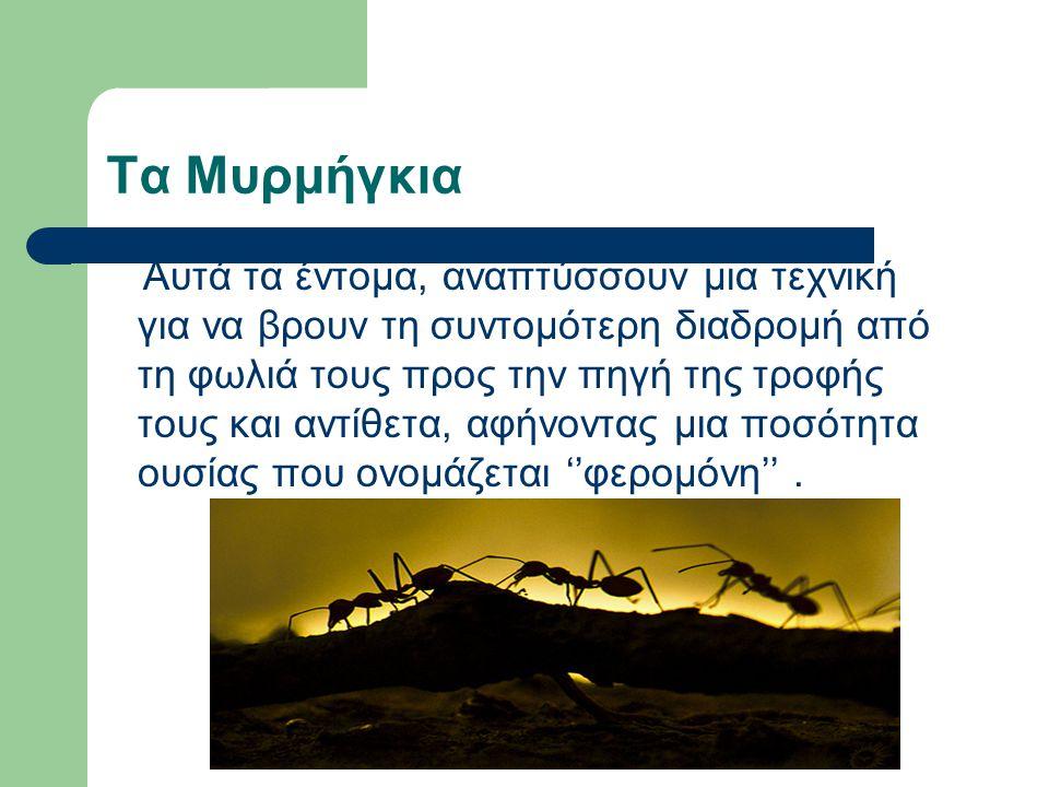 Τα Μυρμήγκια