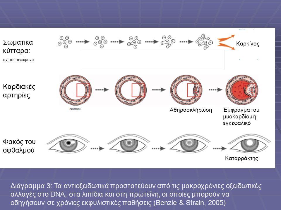 Σωματικά κύτταρα: Καρδιακές αρτηρίες Φακός του οφθαλμού