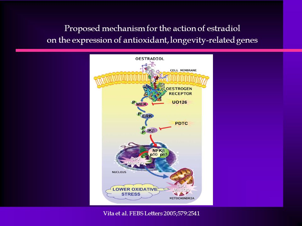 Proposed mechanism for the action of estradiol on the expression of antioxidant, longevity-related genes