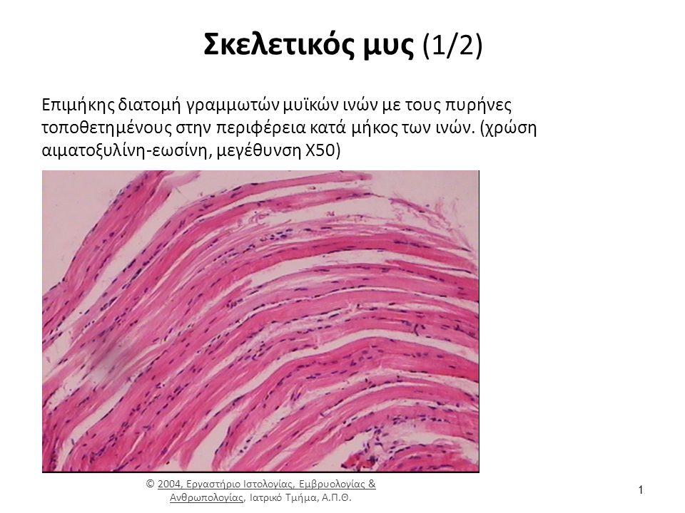 Σκελετικός μυς (2/2)