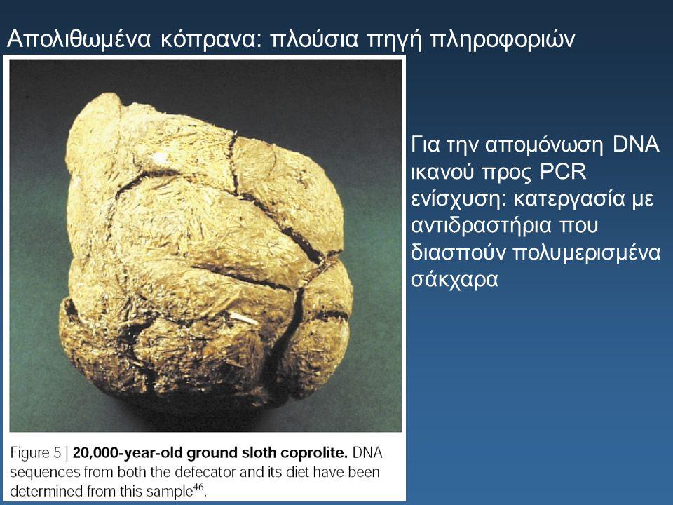 Απολιθωμένα κόπρανα: πλούσια πηγή πληροφοριών