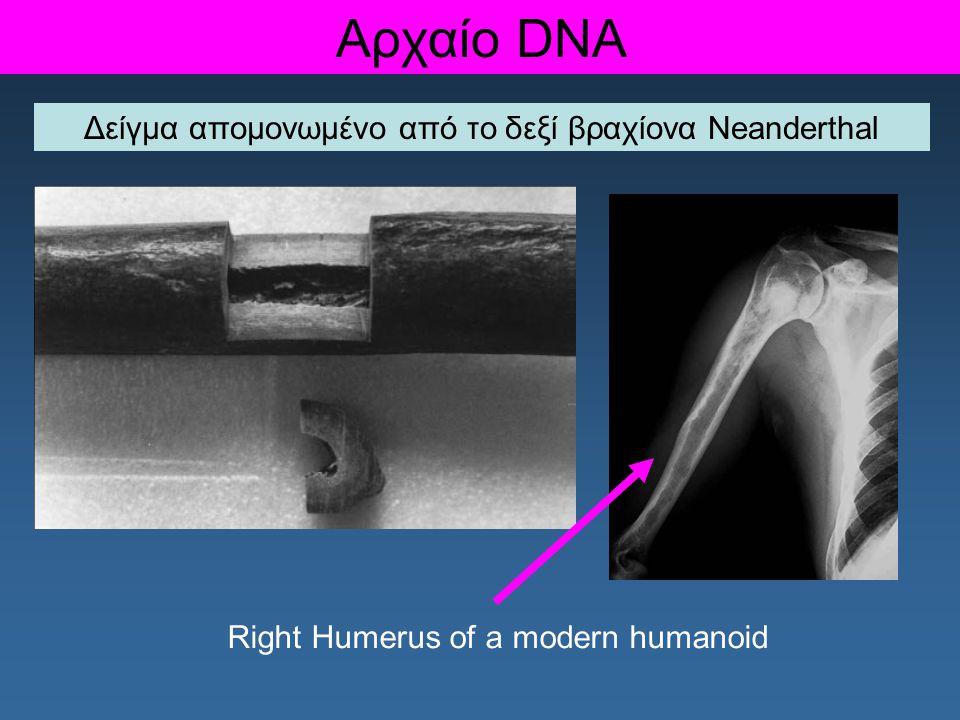 Δείγμα απομονωμένο από το δεξί βραχίονα Neanderthal