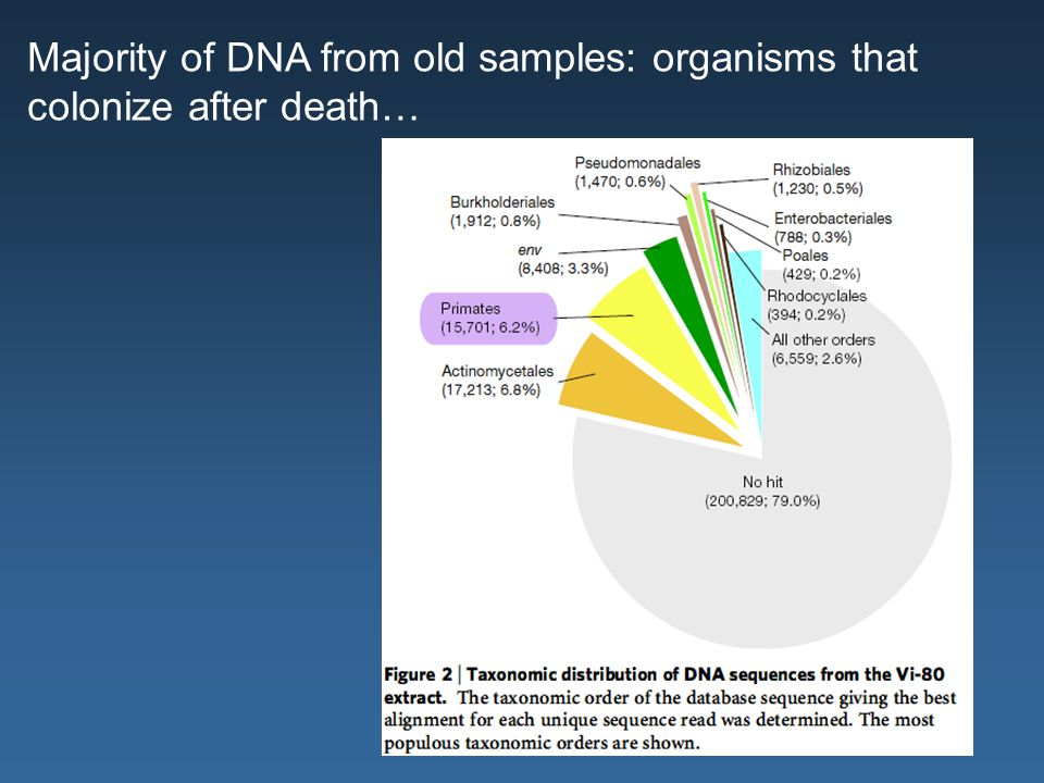 Majority of DNA from old samples: organisms that colonize after death…