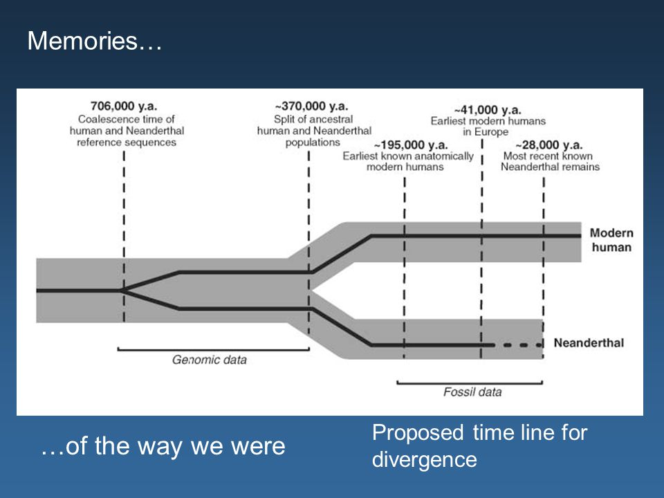 Memories… Proposed time line for divergence …of the way we were