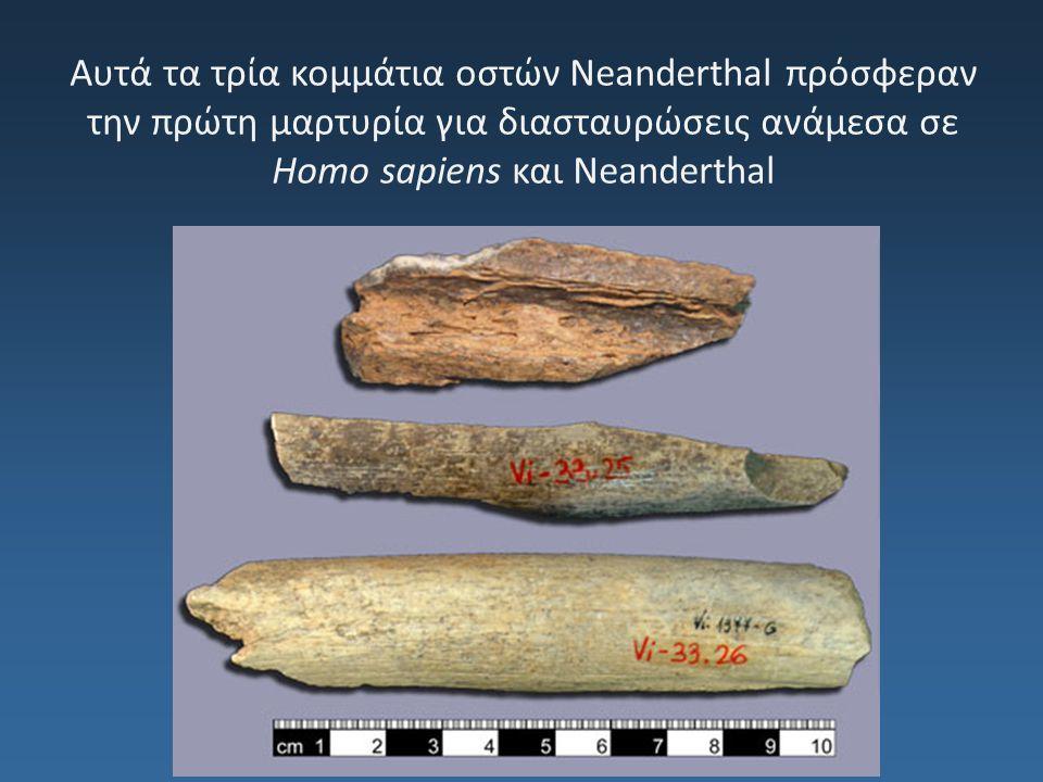 Αυτά τα τρία κομμάτια οστών Neanderthal πρόσφεραν την πρώτη μαρτυρία για διασταυρώσεις ανάμεσα σε Homo sapiens και Neanderthal