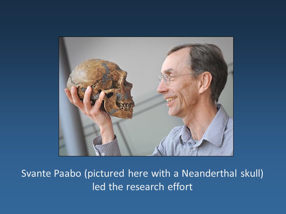 Svante Paabo (pictured here with a Neanderthal skull) led the research effort