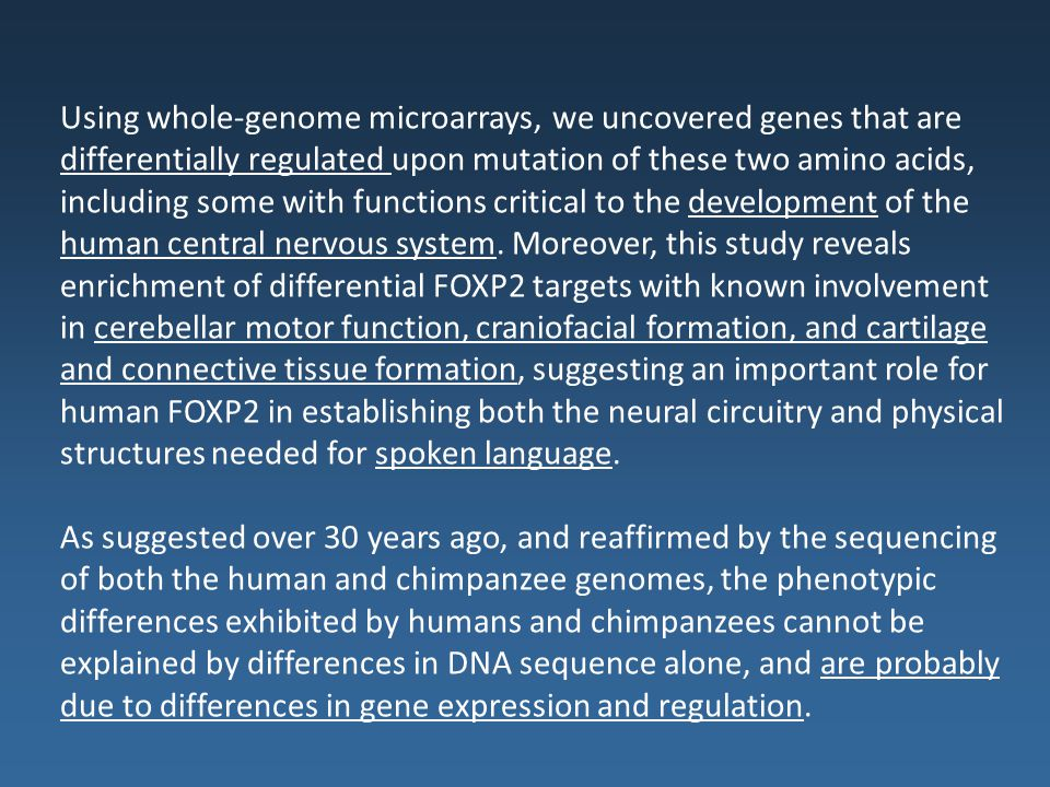 Using whole-genome microarrays, we uncovered genes that are differentially regulated upon mutation of these two amino acids, including some with functions critical to the development of the human central nervous system. Moreover, this study reveals enrichment of differential FOXP2 targets with known involvement in cerebellar motor function, craniofacial formation, and cartilage and connective tissue formation, suggesting an important role for human FOXP2 in establishing both the neural circuitry and physical structures needed for spoken language.