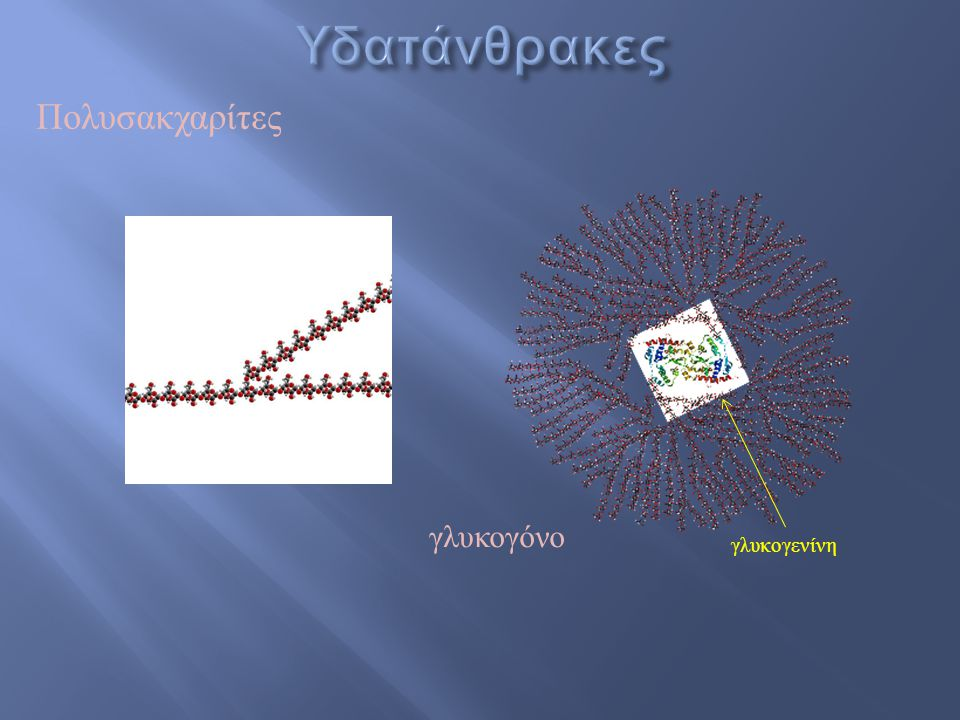 Υδατάνθρακες Πολυσακχαρίτες γλυκογόνο γλυκογενίνη