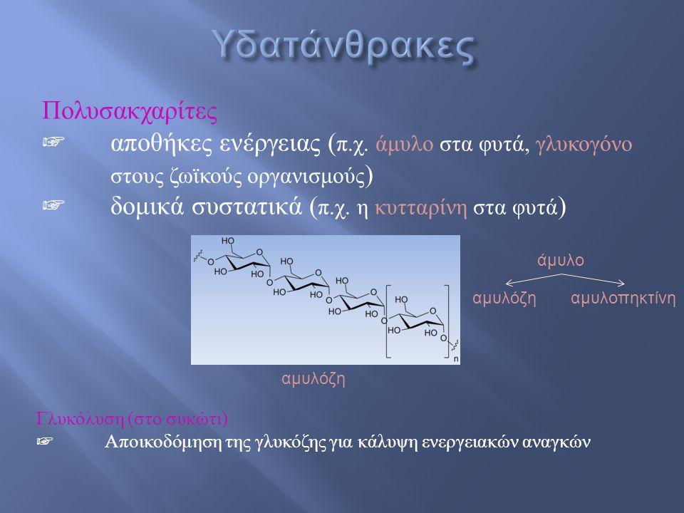 Υδατάνθρακες Πολυσακχαρίτες