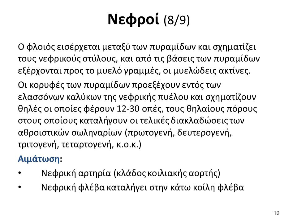 Νεφροί (9/9) Νεύρωση: ΑΝΣ (Συμπαθητικό-Παρασυμπαθητικό)
