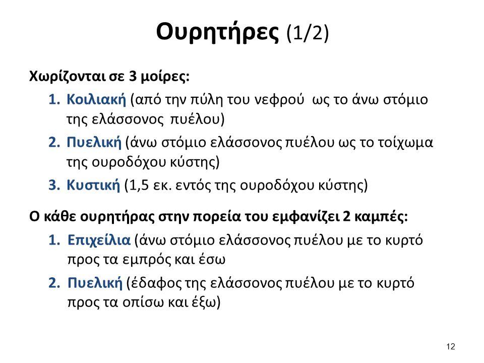 Ουρητήρες (2/2) Έχουν 2 στενώματα: