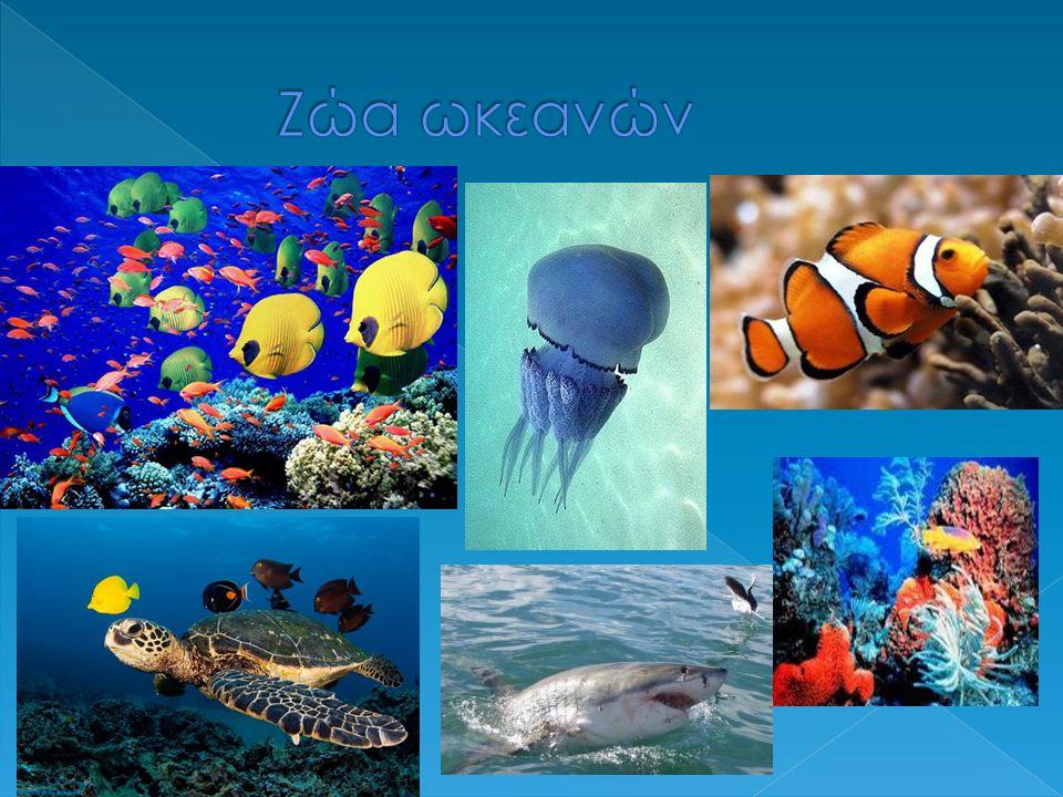 Ζώα ωκεανών