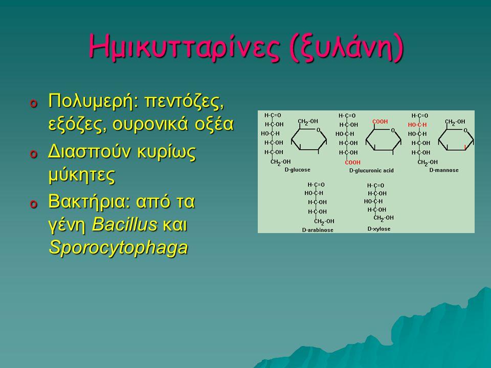 Ημικυτταρίνες (ξυλάνη)