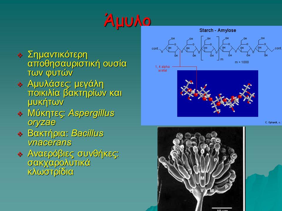 Άμυλο Σημαντικότερη αποθησαυριστική ουσία των φυτών