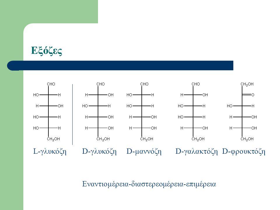 Εξόζες L-γλυκόζη D-γλυκόζη D-μαννόζη D-γαλακτόζη D-φρουκτόζη