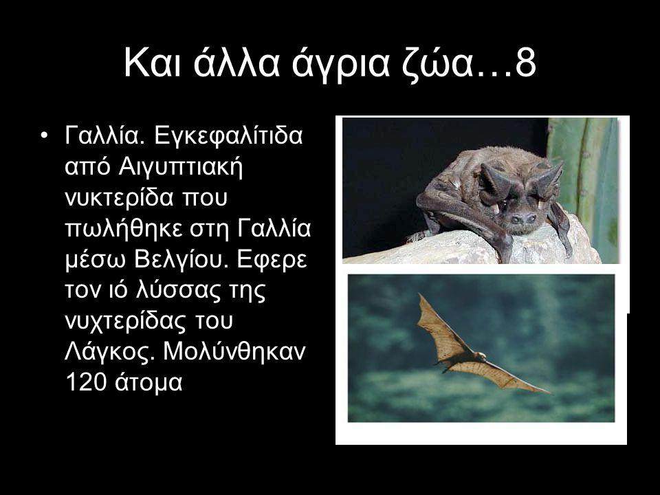 Και άλλα άγρια ζώα…8