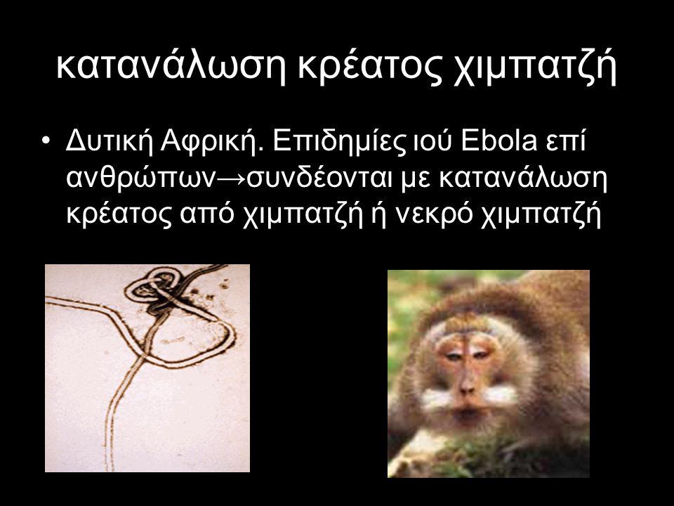 κατανάλωση κρέατος χιμπατζή