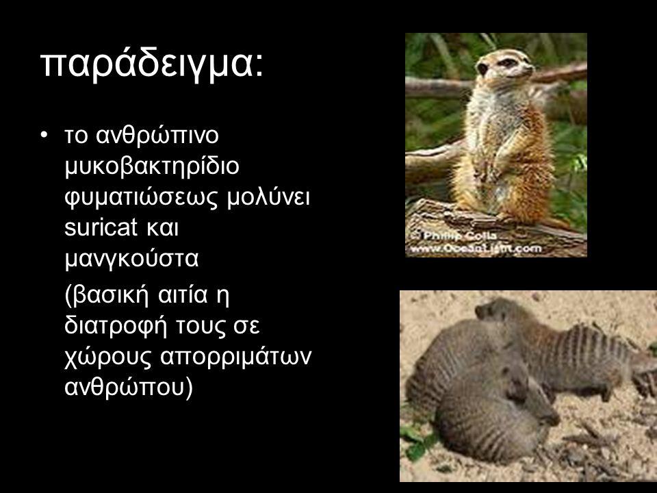 παράδειγμα: το ανθρώπινο μυκοβακτηρίδιο φυματιώσεως μολύνει suricat και μανγκούστα.