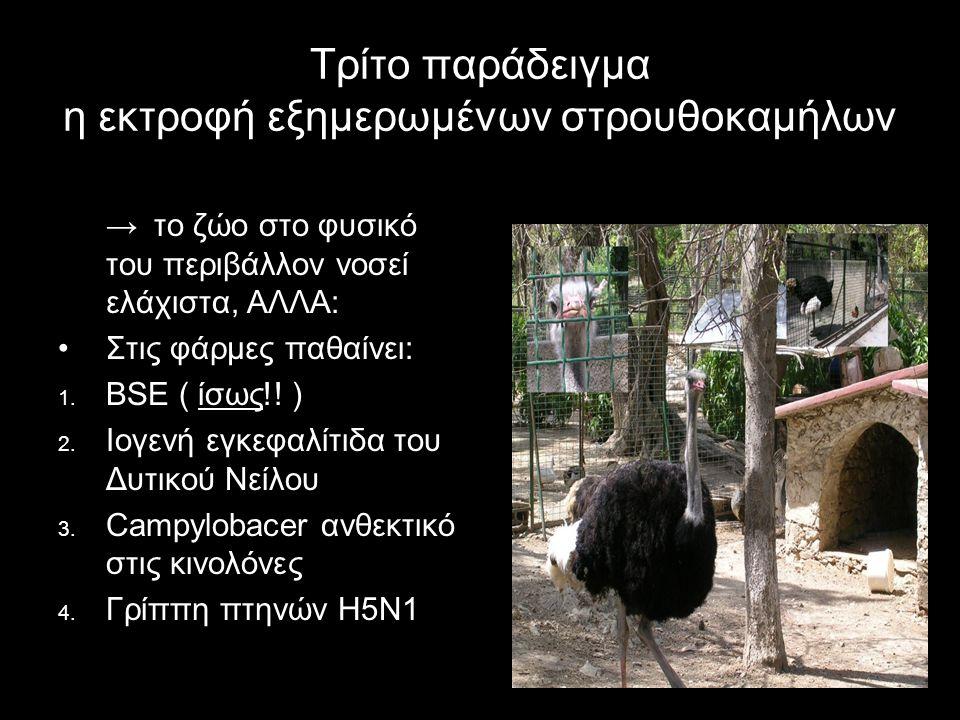 Τρίτο παράδειγμα η εκτροφή εξημερωμένων στρουθοκαμήλων