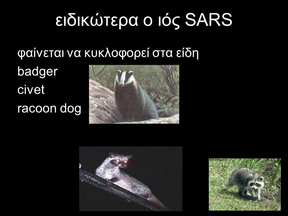 ειδικώτερα ο ιός SARS φαίνεται να κυκλοφορεί στα είδη badger civet