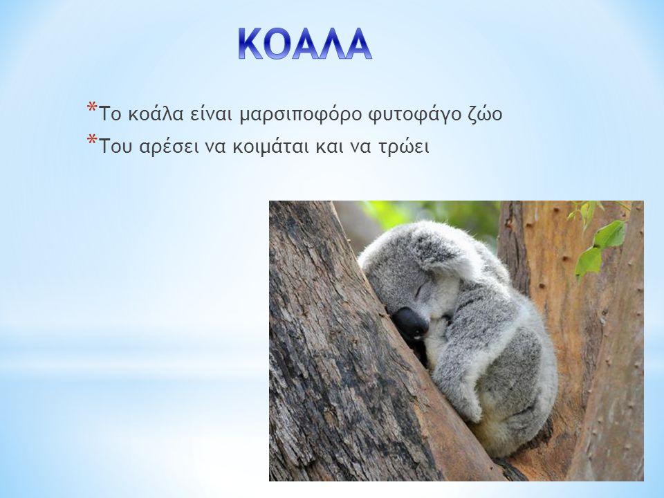 ΚΟΑΛΑ Το κοάλα είναι μαρσιποφόρο φυτοφάγο ζώο