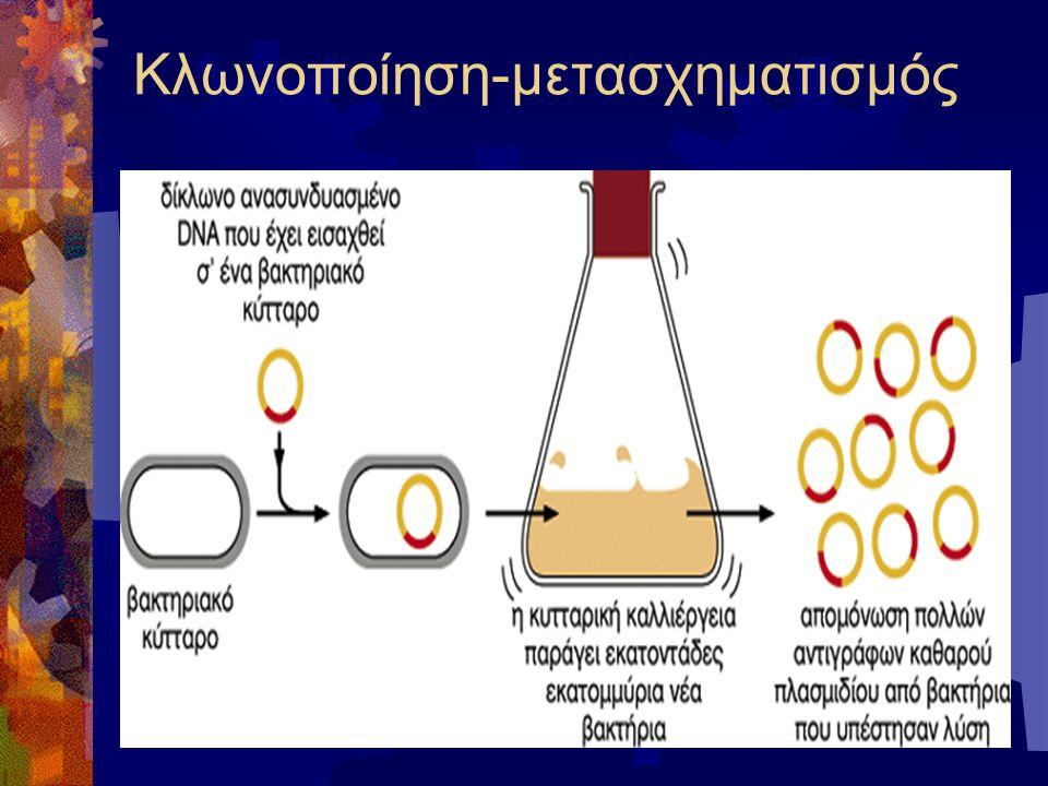 Κλωνοποίηση-μετασχηματισμός