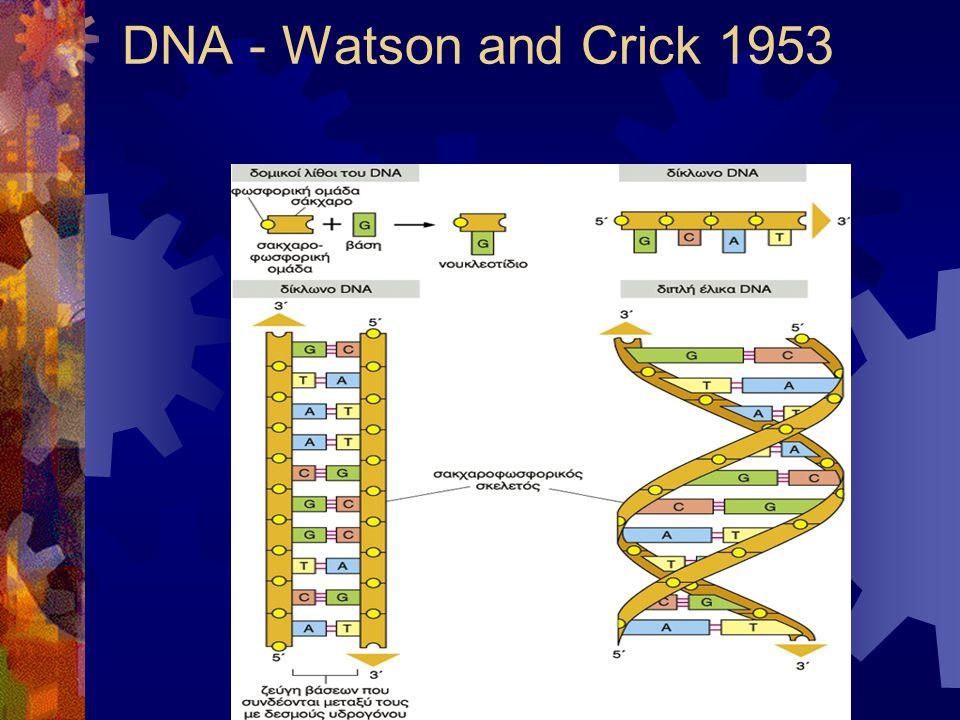 DNA - Watson and Crick 1953
