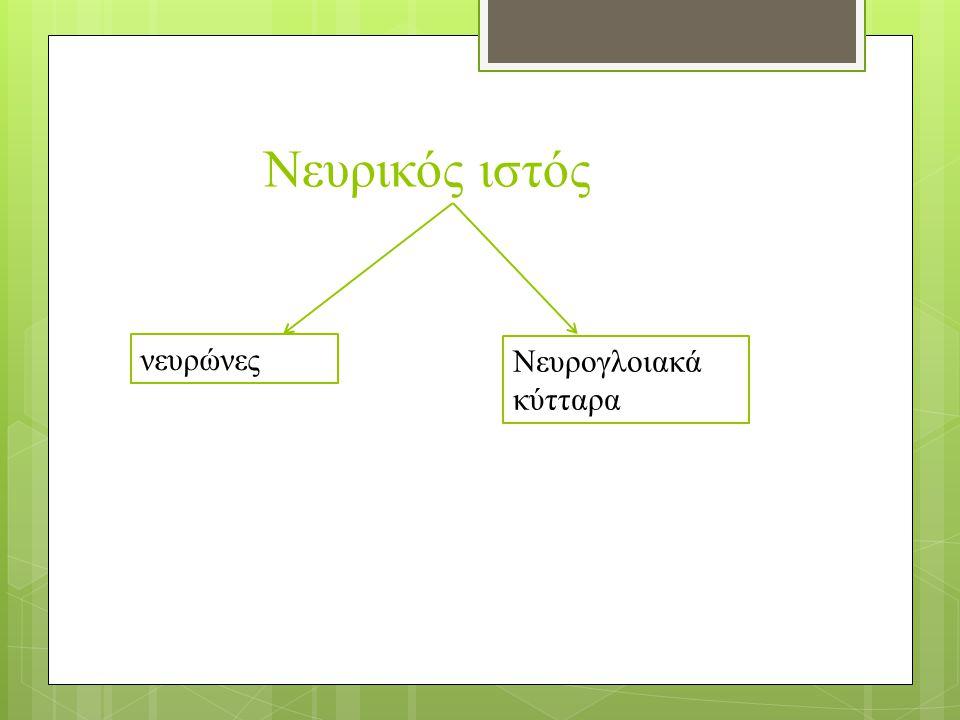 Νευρικός ιστός νευρώνες Νευρογλοιακά κύτταρα