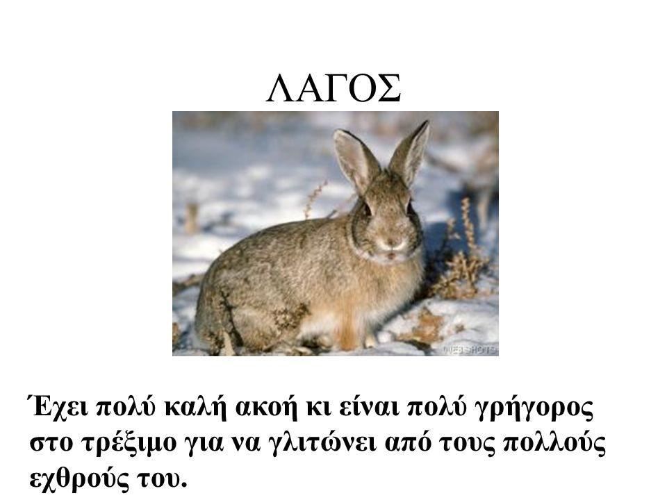 ΛΑΓΟΣ Η φωτογραφία βρέθηκε στην ιστοσελίδα www.webshots.com/animals/bunny s .