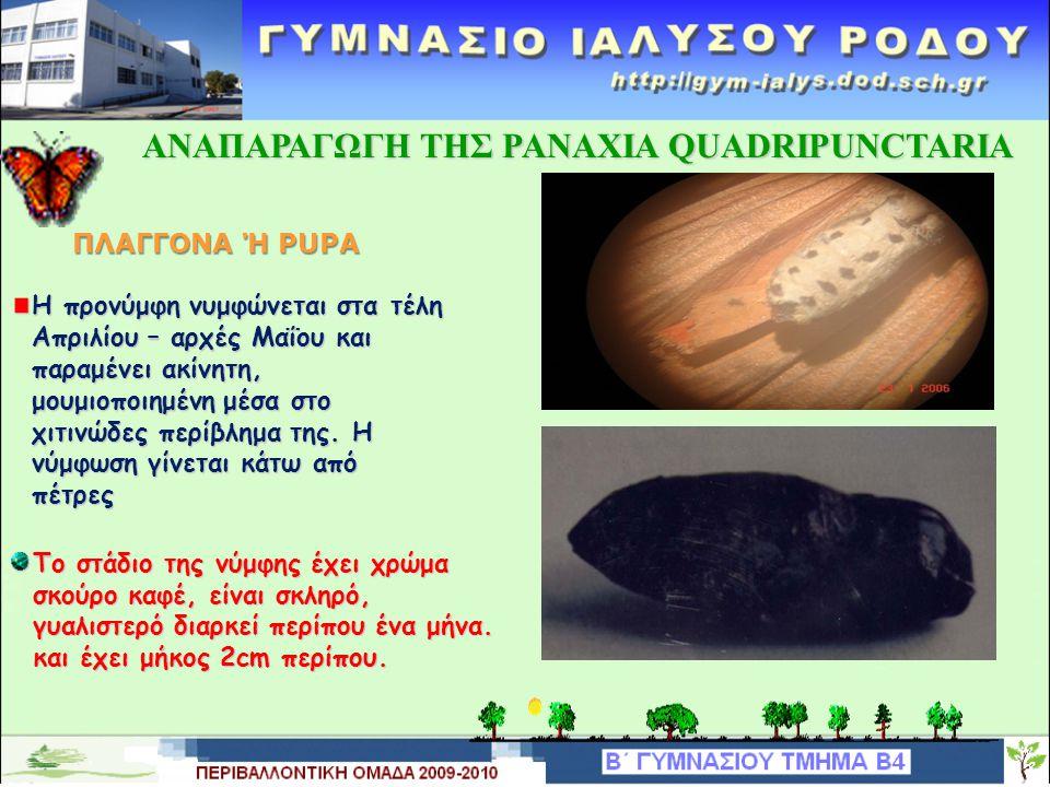 ΑΝΑΠΑΡΑΓΩΓΗ TΗΣ PANAXIA QUADRIPUNCTARIA