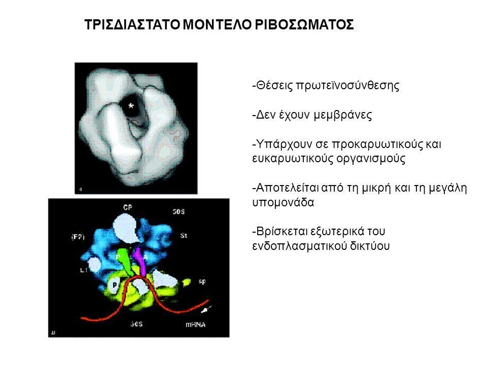 ΤΡΙΣΔΙΑΣΤΑΤΟ ΜΟΝΤΕΛΟ ΡΙΒΟΣΩΜΑΤΟΣ
