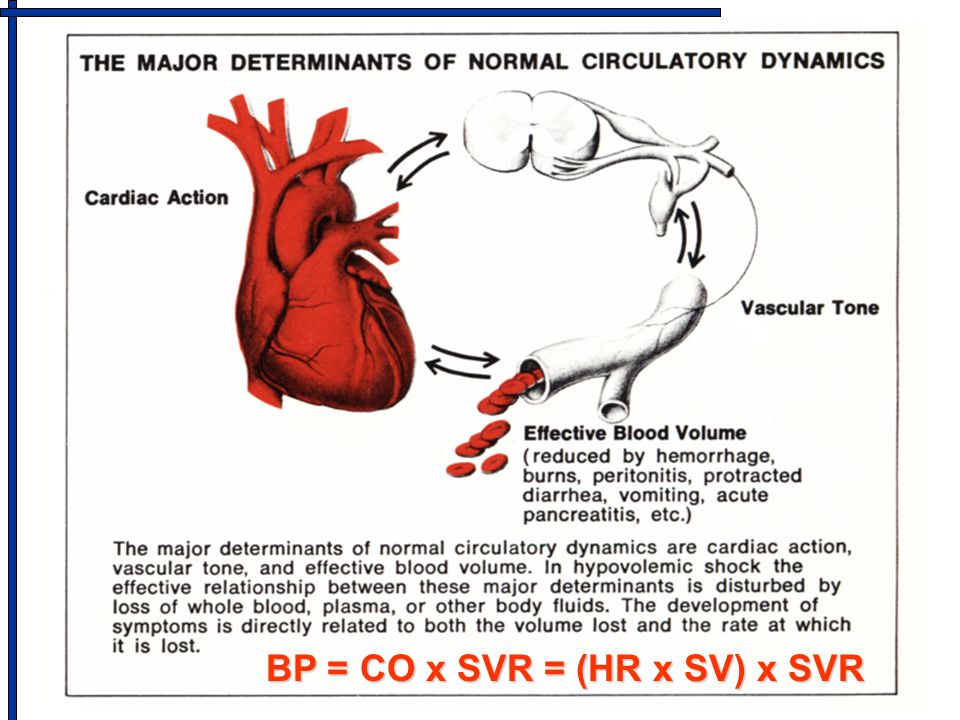 BP = CO x SVR = (HR x SV) x SVR