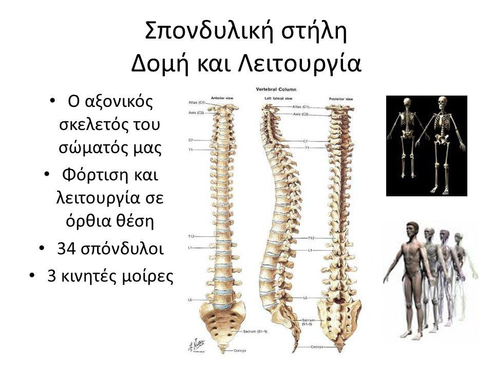 Σπονδυλική στήλη Δομή και Λειτουργία