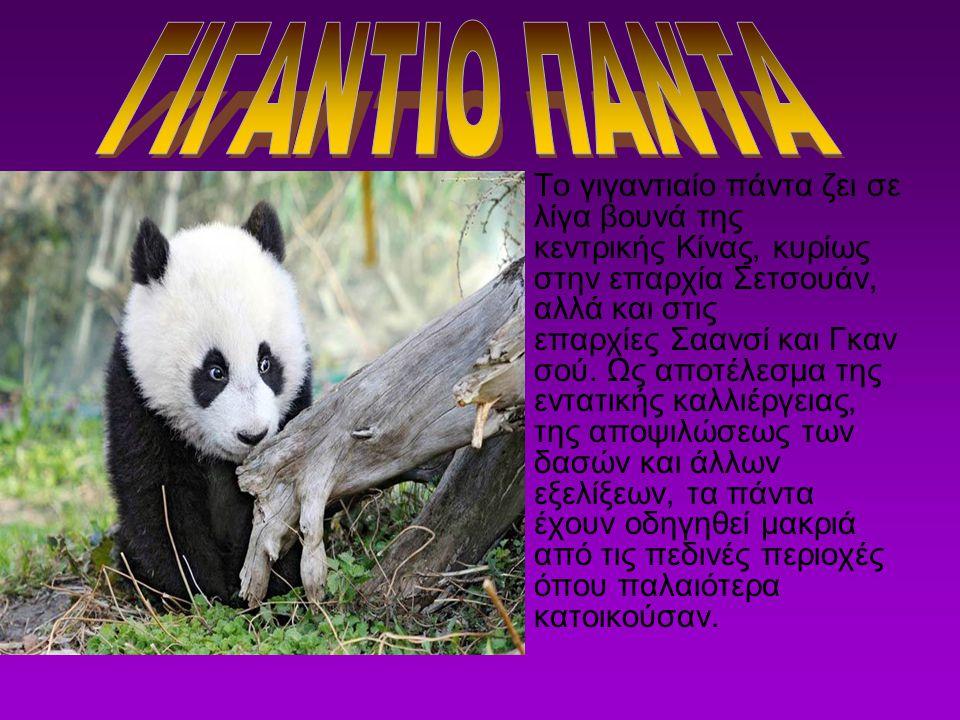 ΓΙΓΑΝΤΙΟ ΠΑΝΤΑ