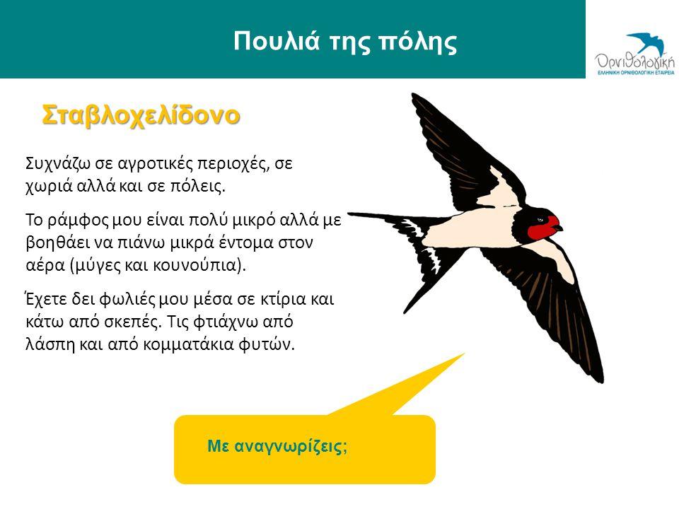 Πουλιά της πόλης Σταβλοχελίδονο