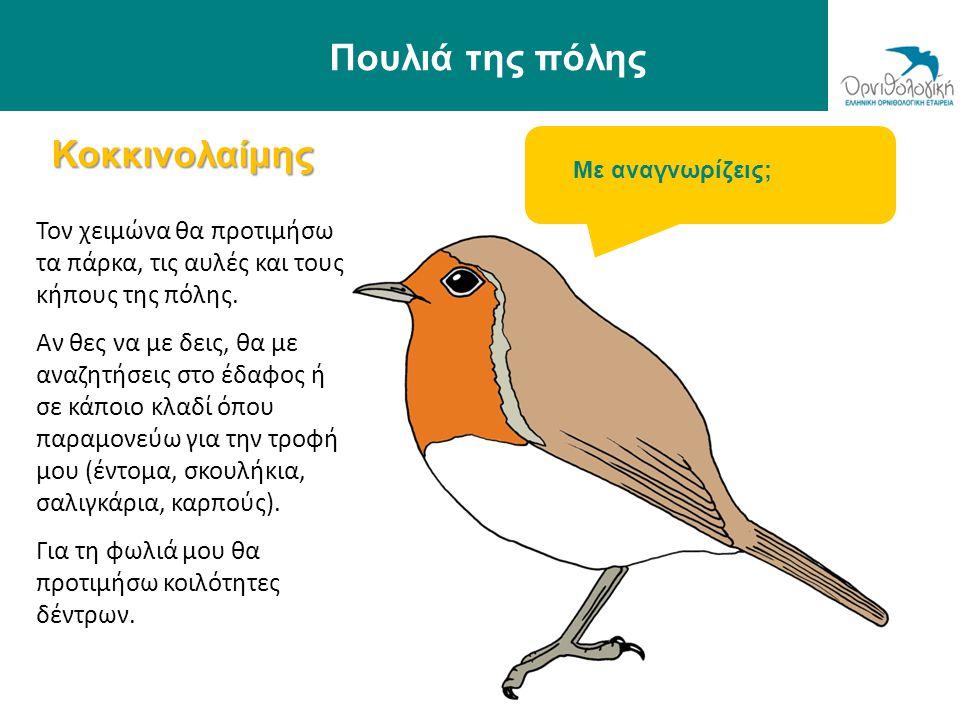 Πουλιά της πόλης Κοκκινολαίμης