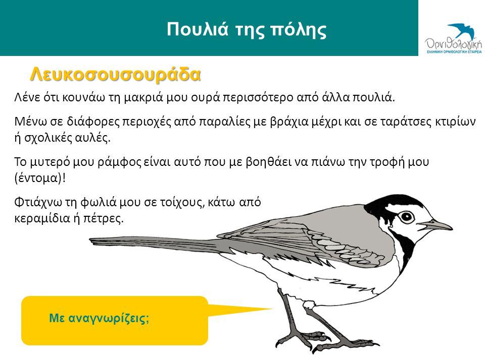 Πουλιά της πόλης Λευκοσουσουράδα