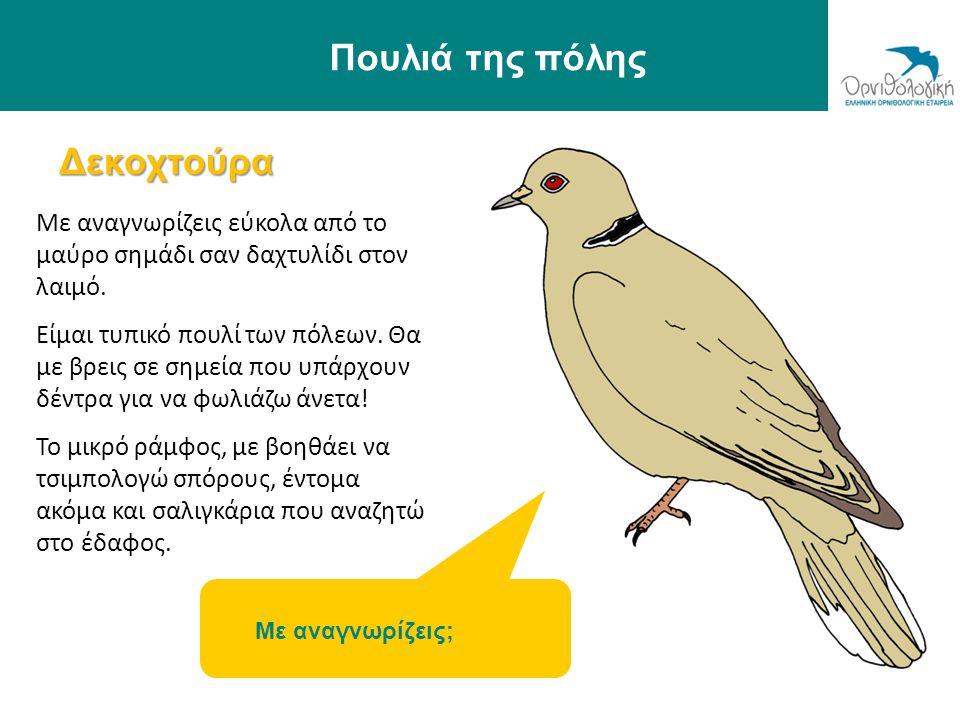 Πουλιά της πόλης Δεκοχτούρα