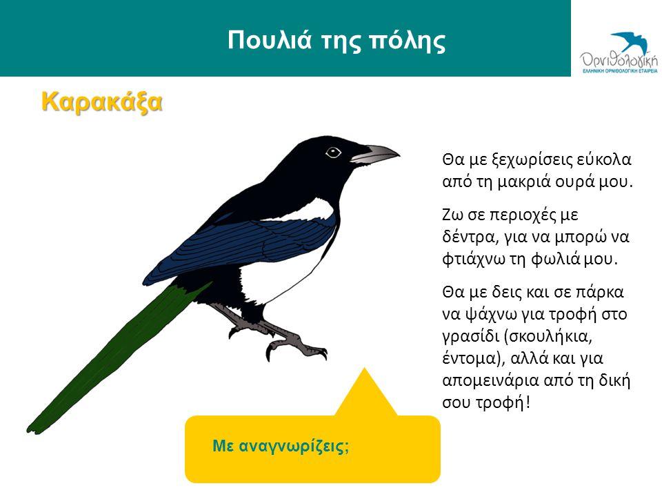 Πουλιά της πόλης Καρακάξα