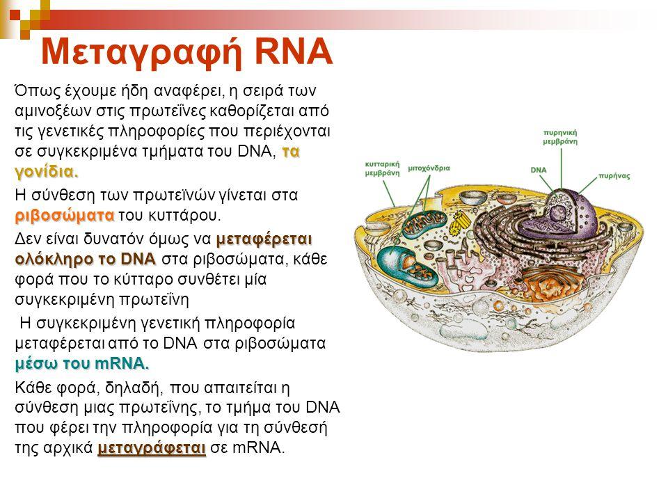 Μεταγραφή RNA