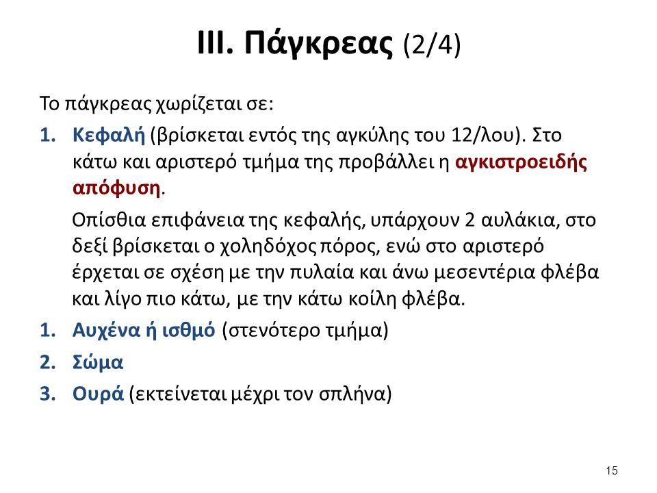 ΙΙΙ. Πάγκρεας (3/4)