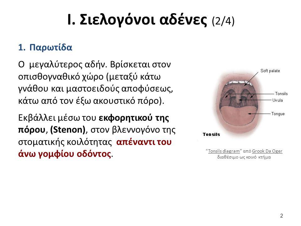 Ι. Σιελογόνοι αδένες (3/4)