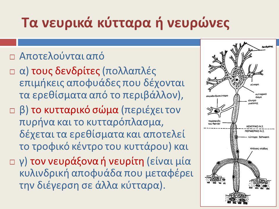 Τα νευρικά κύτταρα ή νευρώνες