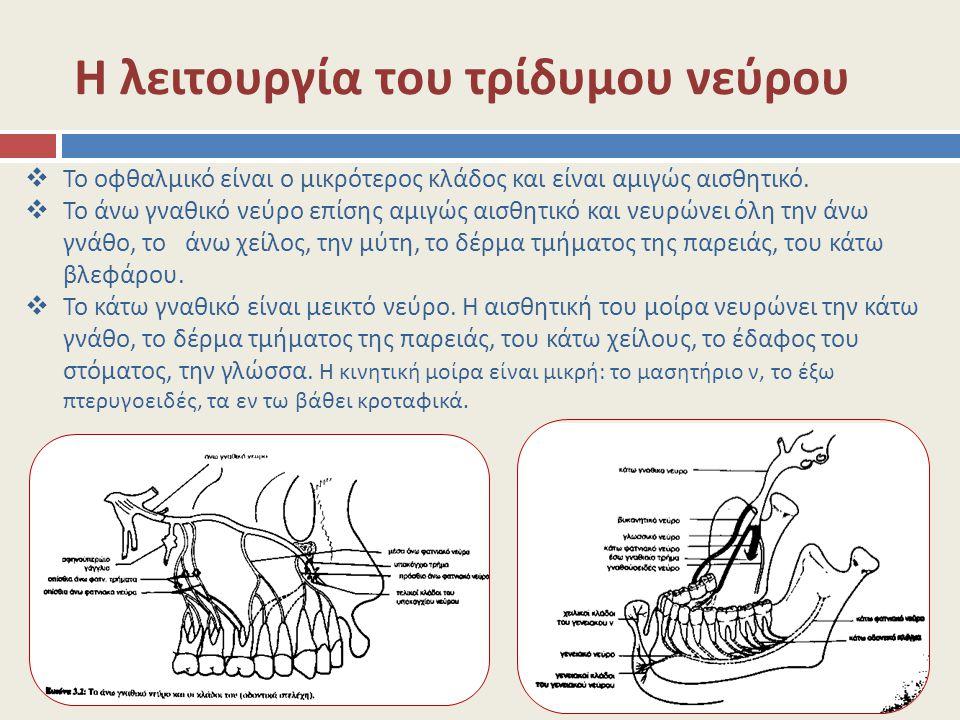 Η λειτουργία του τρίδυμου νεύρου