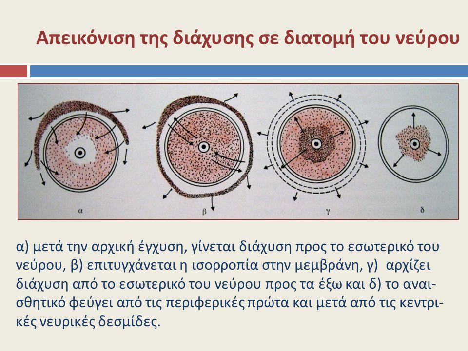 Απεικόνιση της διάχυσης σε διατομή του νεύρου