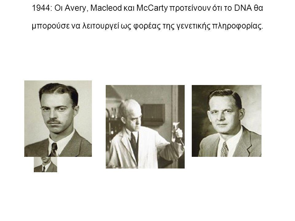 1944: Οι Avery, Macleod και McCarty προτείνουν ότι το DNA θα μπορούσε να λειτουργεί ως φορέας της γενετικής πληροφορίας.